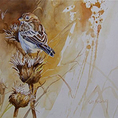 Thistle and Vesper Sparrow
