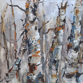 Birch Study in Winter